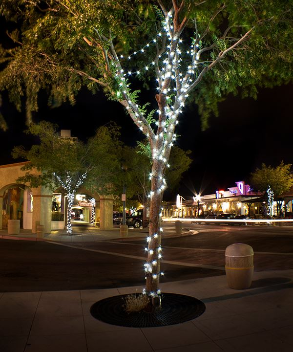A tree with lights on it